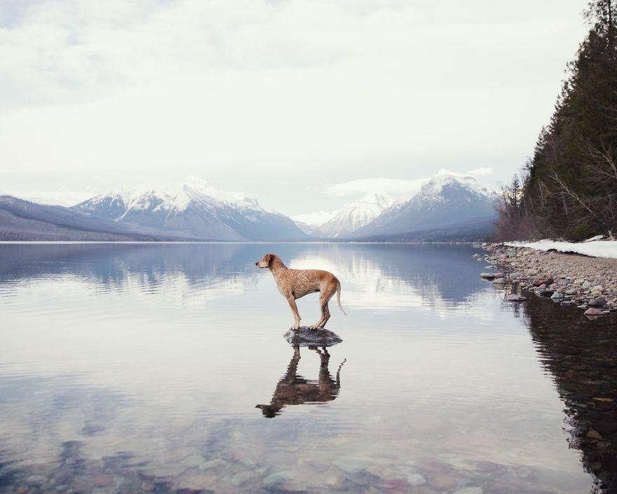 Perro y fotografo viaje 7