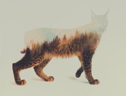 animales acuarela 15