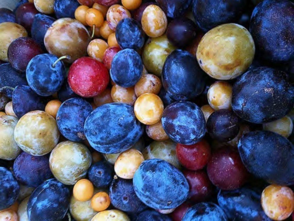 arbol_de_frutas_5