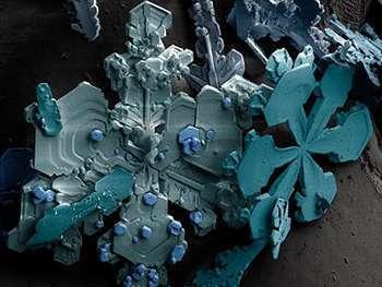 cosas microscopio 1