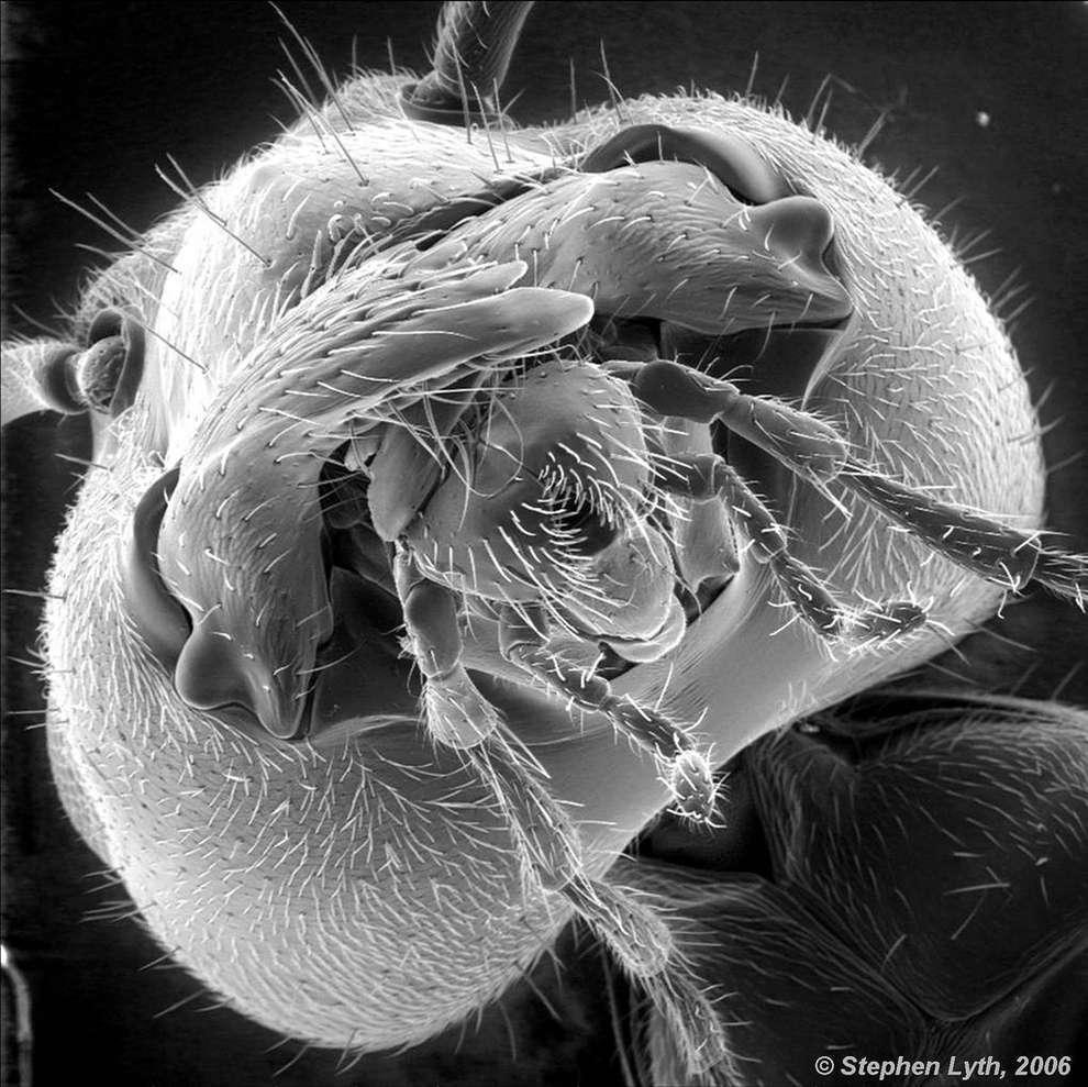 cosas microscopio 18