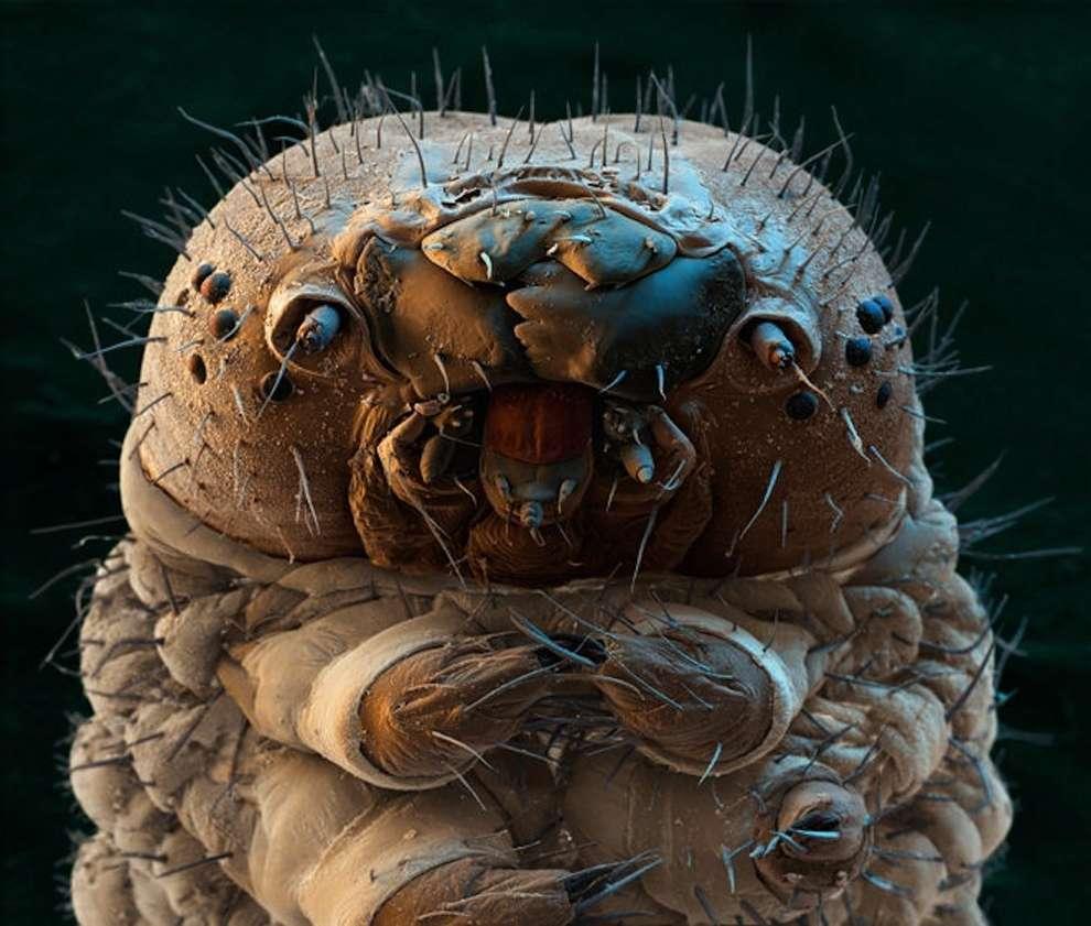 cosas microscopio 20