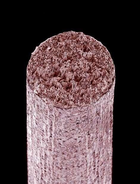 cosas microscopio 22