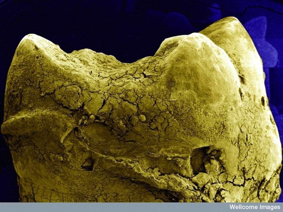cosas microscopio 25
