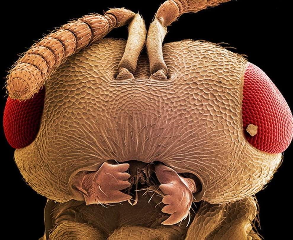 cosas microscopio 29