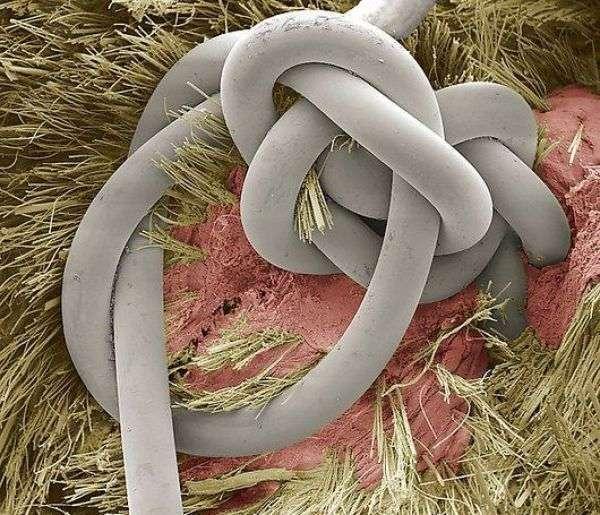 cosas microscopio 31