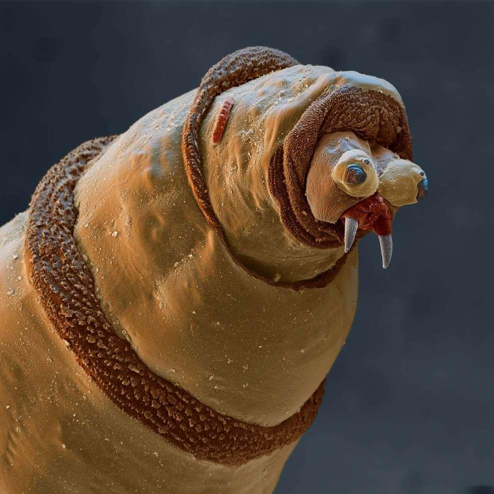 cosas microscopio 34