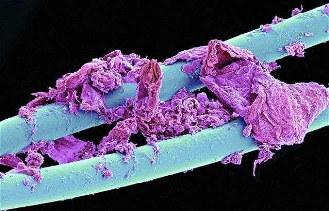 cosas microscopio 35
