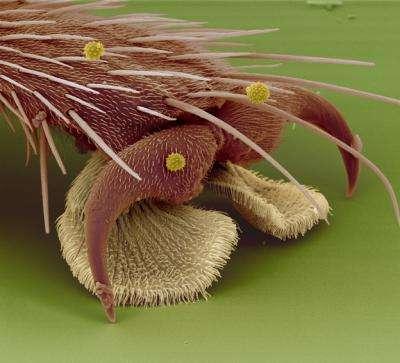 cosas microscopio 36