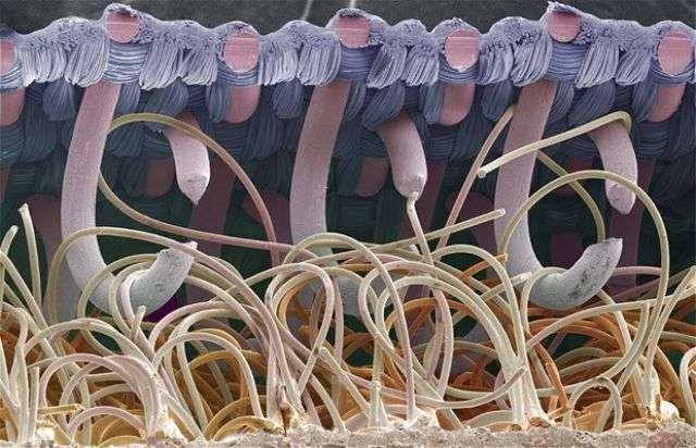 cosas microscopio 6