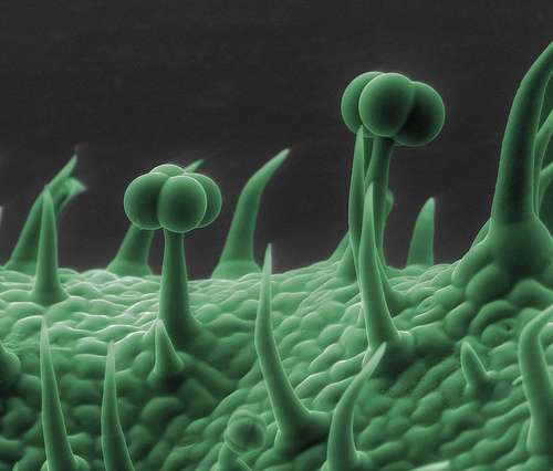 cosas microscopio 9