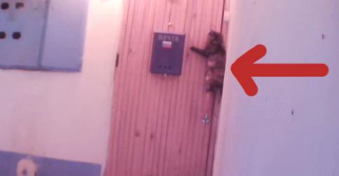 gato-timbre