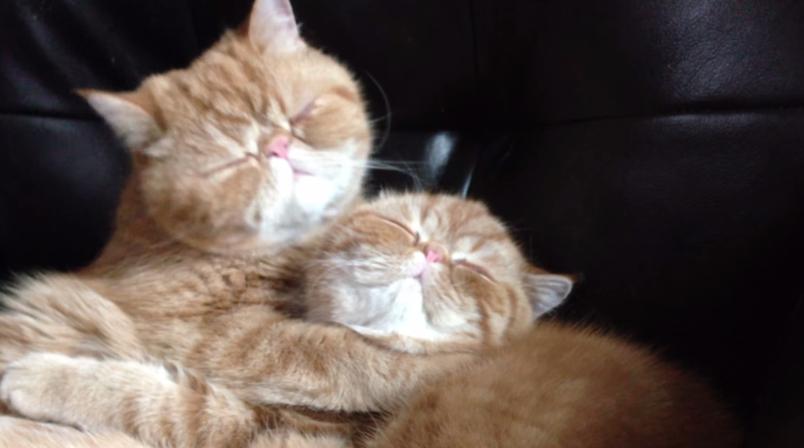 gatos-abrazo