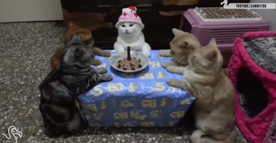 gatos cumpleanos portada