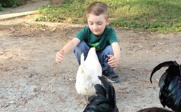 nino-abraza-gallina