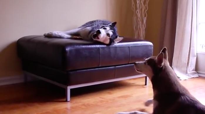 perros-hablan