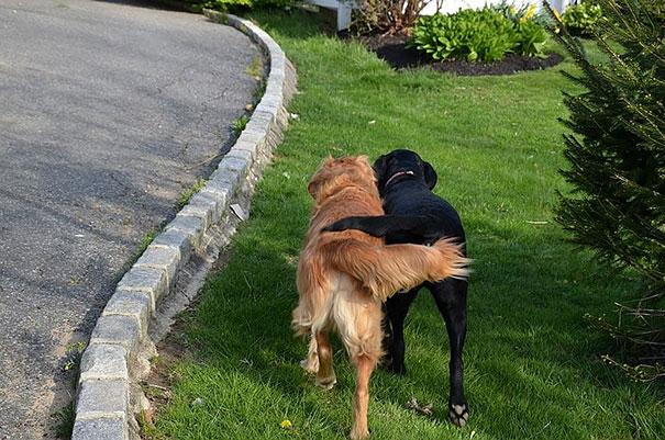 perros_mejores_amigos_11