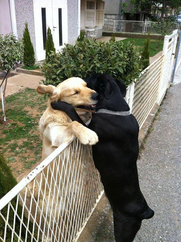 perros_mejores_amigos_12