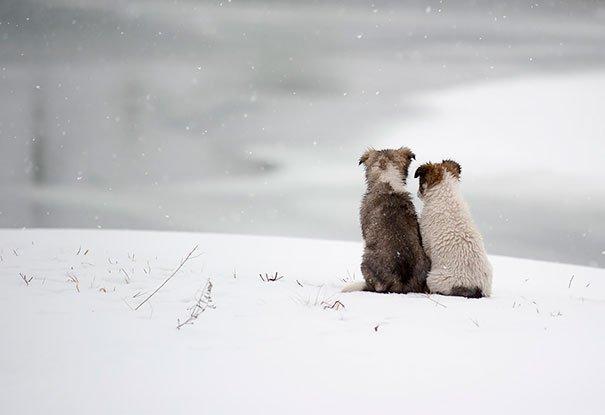 perros_mejores_amigos_15