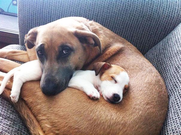 perros_mejores_amigos_16