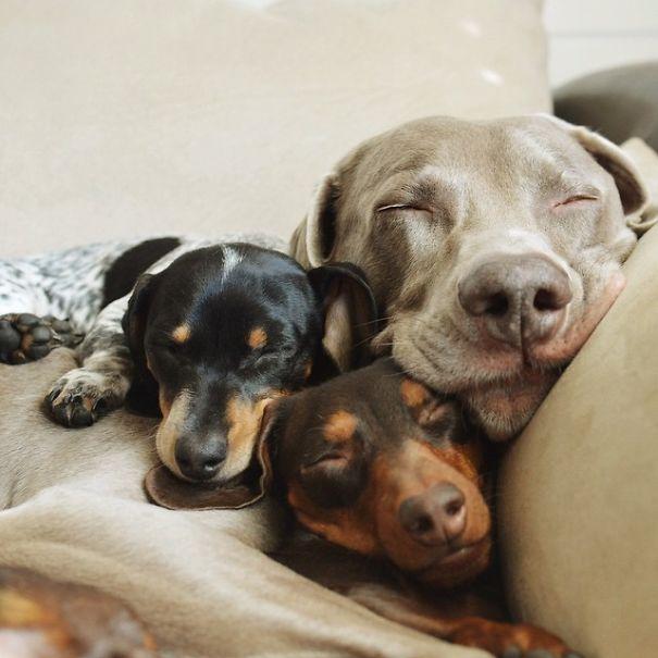 perros_mejores_amigos_18