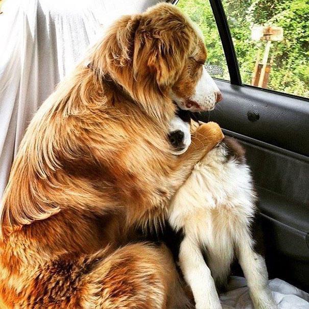 perros_mejores_amigos_2