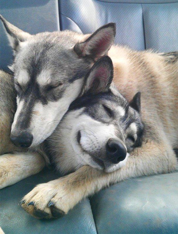 perros_mejores_amigos_20