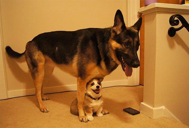 perros_mejores_amigos_22