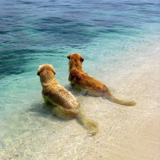 perros_mejores_amigos_23