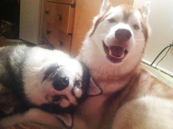 perros_mejores_amigos_3