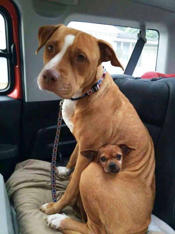perros_mejores_amigos_4