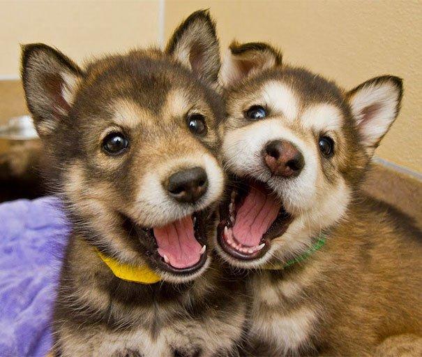 perros_mejores_amigos_5