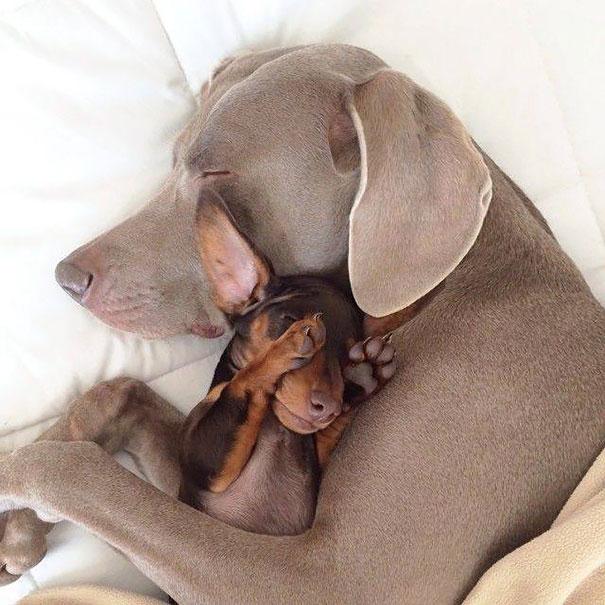 perros_mejores_amigos_6