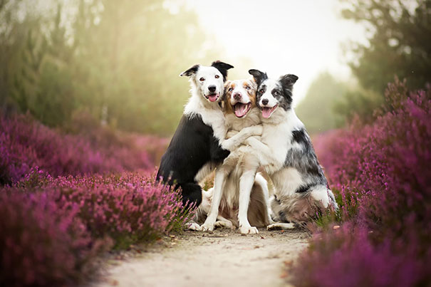 perros_mejores_amigos_7