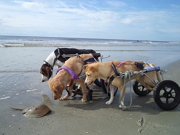 perros_mejores_amigos_9
