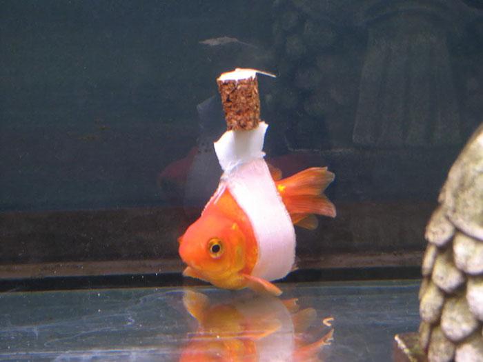 pez en silla de ruedas 1