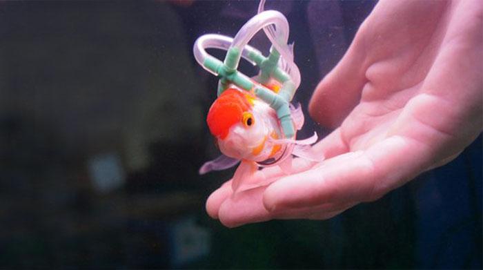 pez en silla de ruedas 3