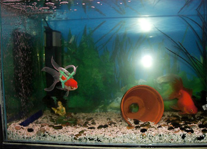 pez en silla de ruedas 4