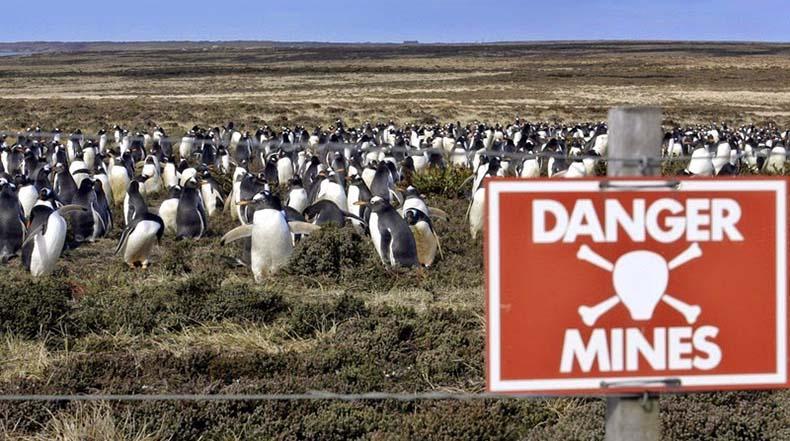 pinguinos en peligro 1