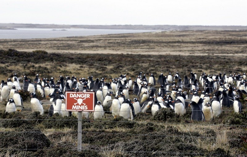 pinguinos en peligro 2