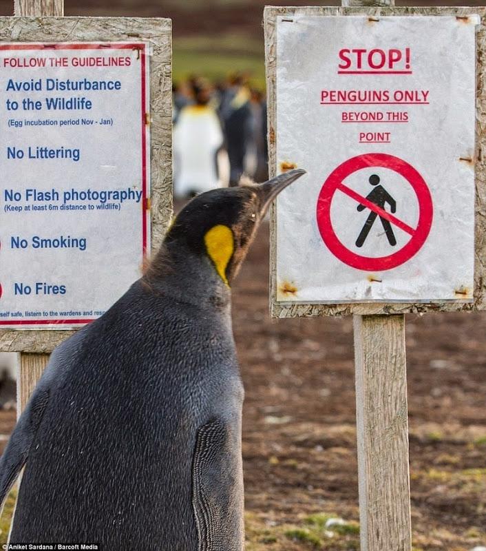 pinguinos en peligro 3