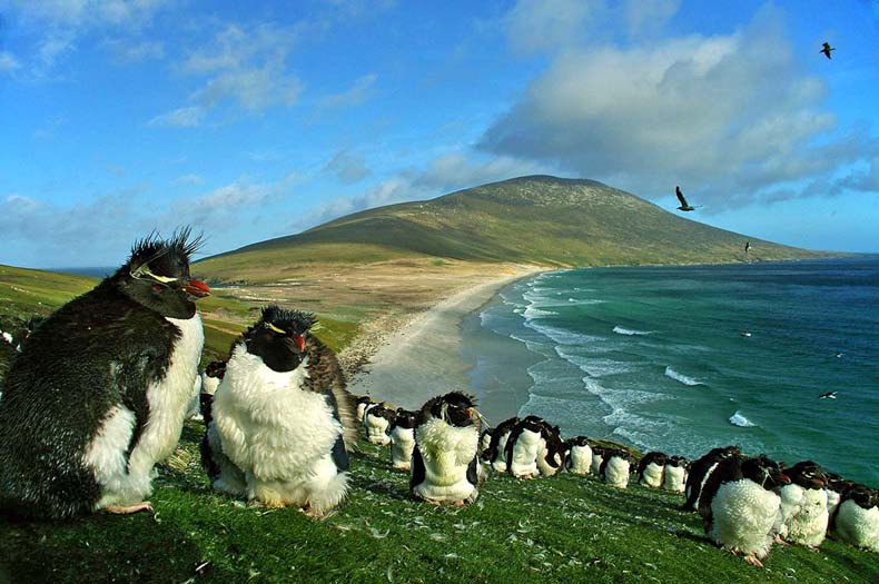 pinguinos en peligro 9