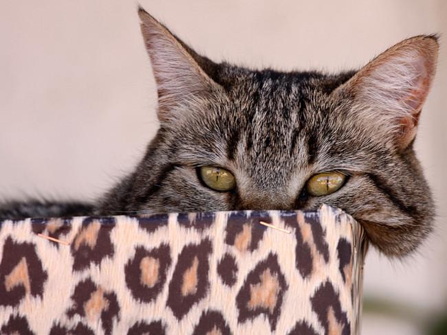 signos de los gatos 2