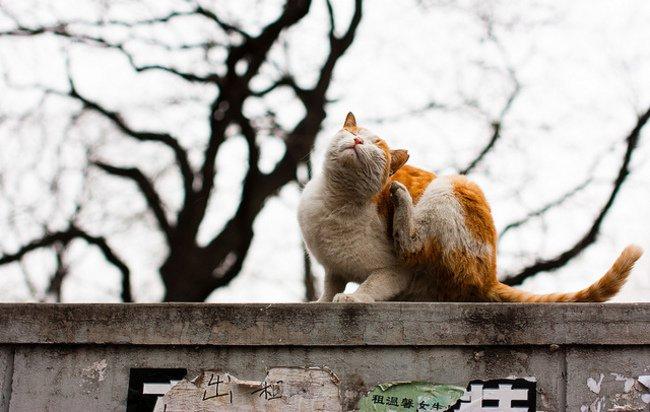 signos de los gatos 7