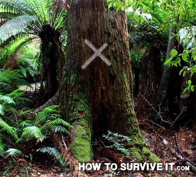 trucos de supervivencia 24