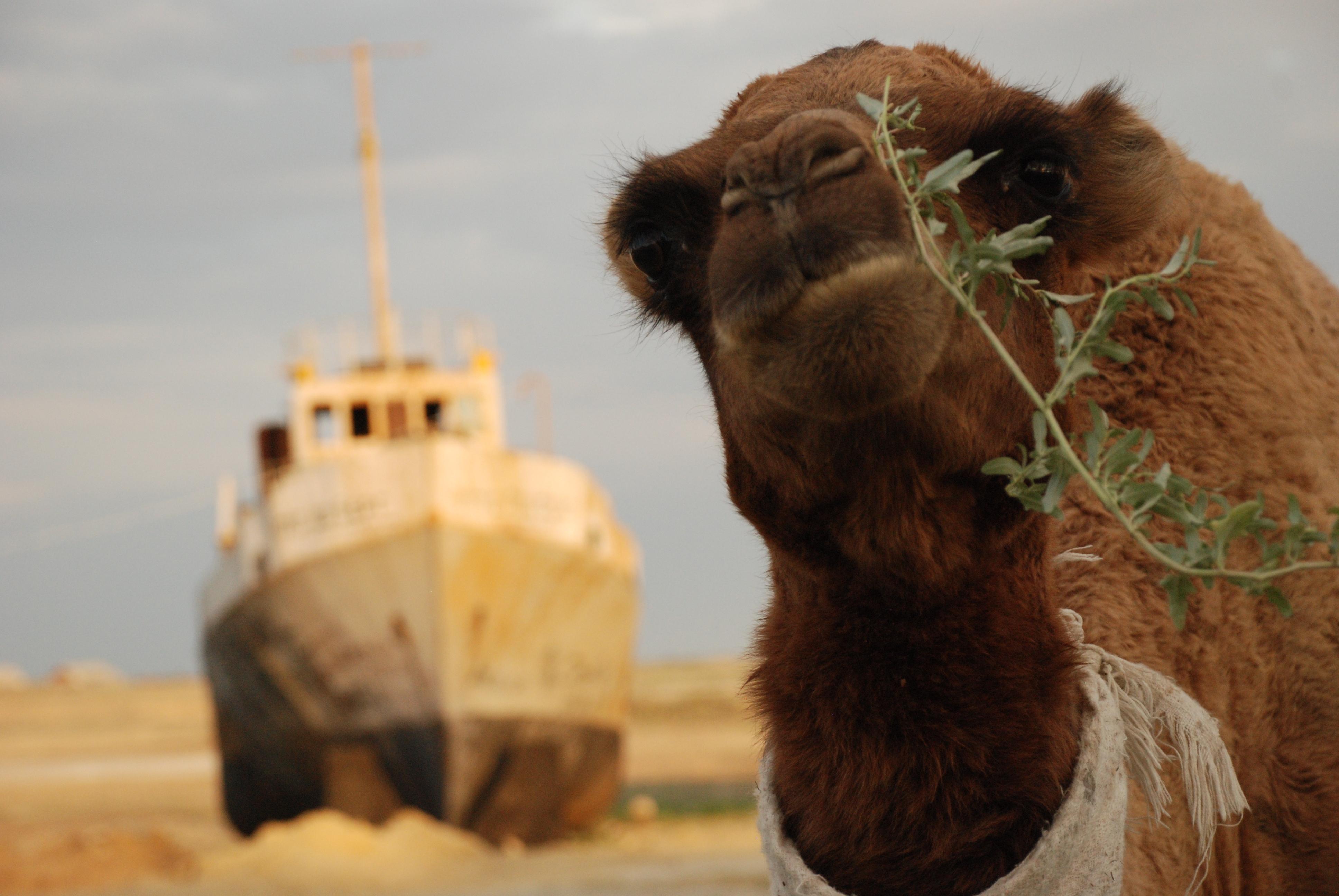Mar de Aral 8