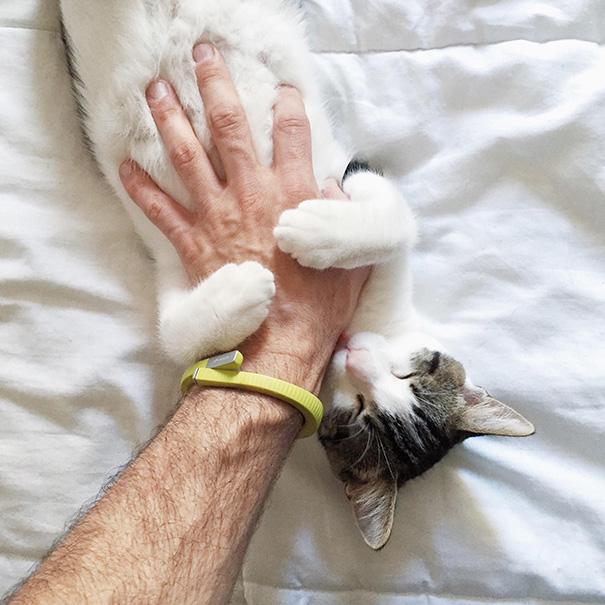 animales_cosquillas_11