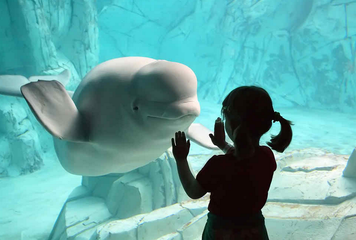 ballenas impresionantes 12