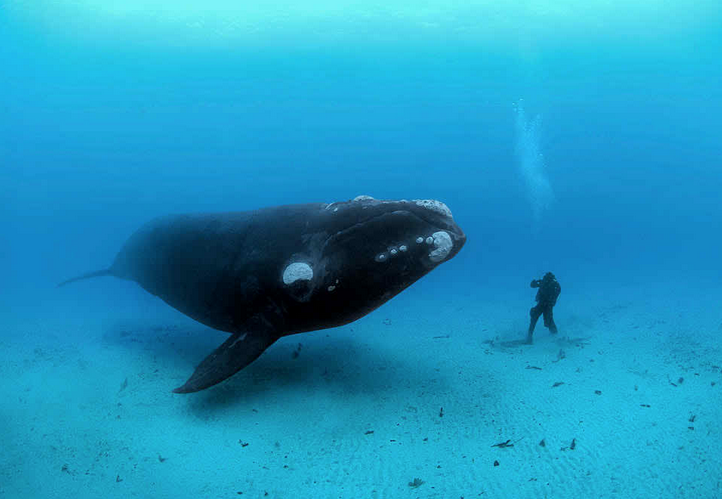 ballenas impresionantes 13