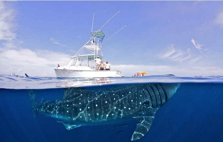 ballenas impresionantes 17